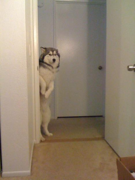 En nyfiken hund tittar fram