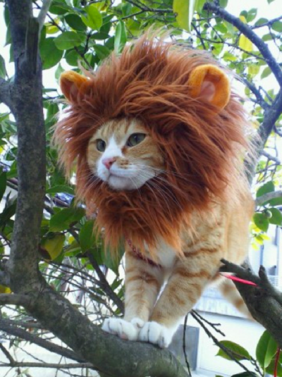 Lejonkatt