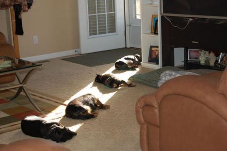 Hundar som gillar solen