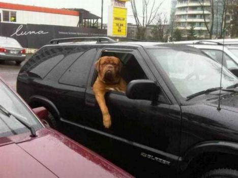 Glidarhund