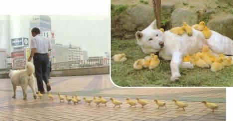 Hunden är fåglarnas bästa vän