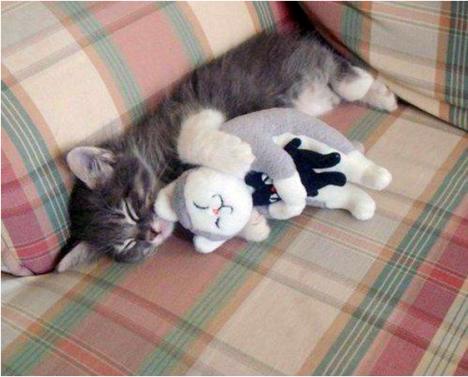 Katt som myser med katt som myser med katt