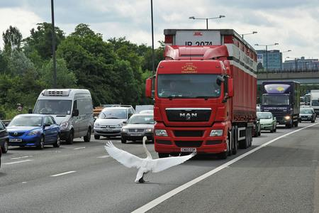 Svan stoppar Londontrafiken