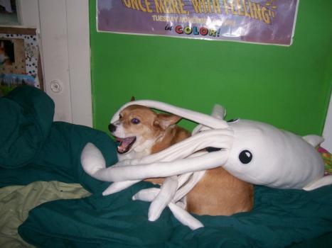 Hund blir anfallen av bläckfisk