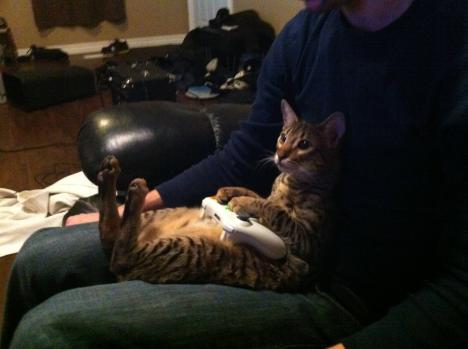 Katt som gillar Xbox