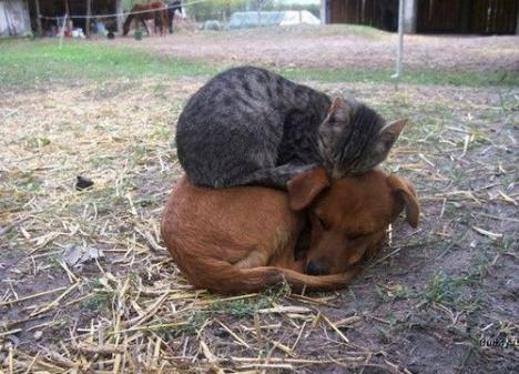 Katt som sover på hund som sover