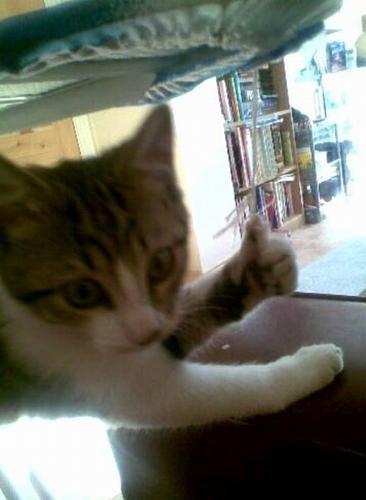 Katt som gör tummen upp