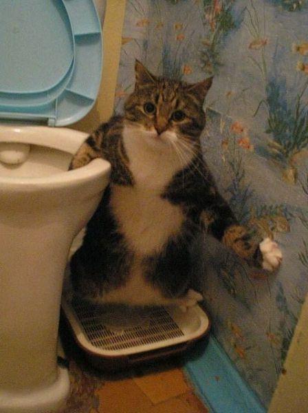 Katt uträttar sina behov stående