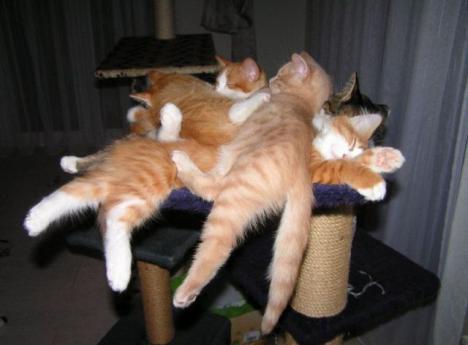 Katter som trivs bra ihop