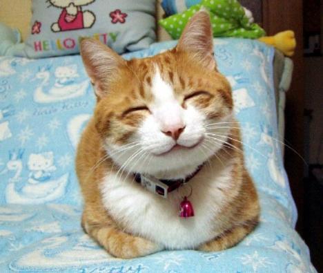 Världens nöjdaste katt
