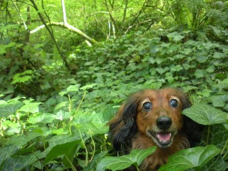 Veckans gladaste hund