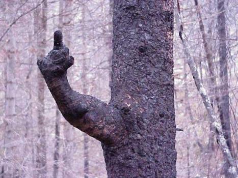 Naturen har ett budskap