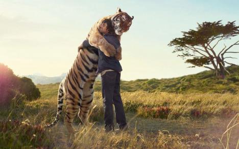 Otrolig Tiger bild !