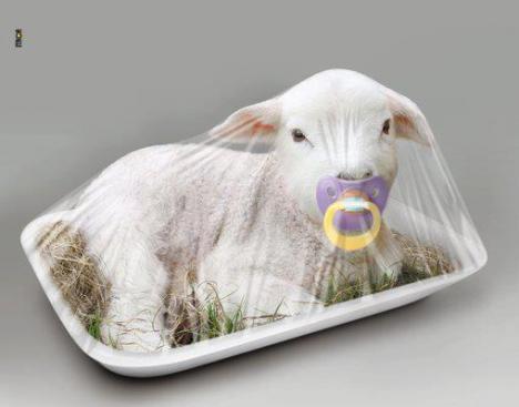 Efter denna  bild äter vi inte lamm kött mera !