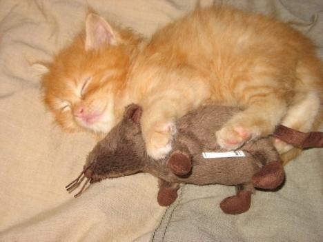 Katt och mus myser