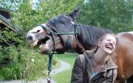 Sådan matte sådan häst