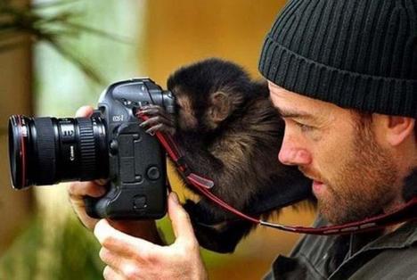 Vem sa att apor inte är smarta?