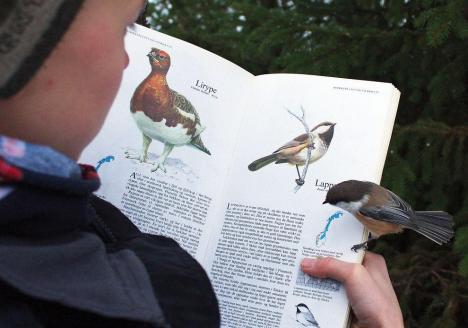 Så ser äkta fågelskådning ut