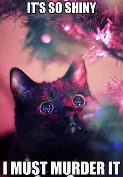 Din katt på Julafton =)