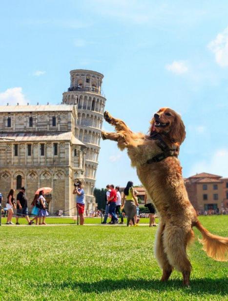 Hunden Pluto är med turist  =)