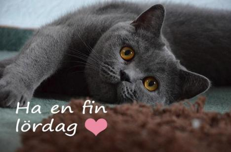 Ha en fin lördag Catlovers!