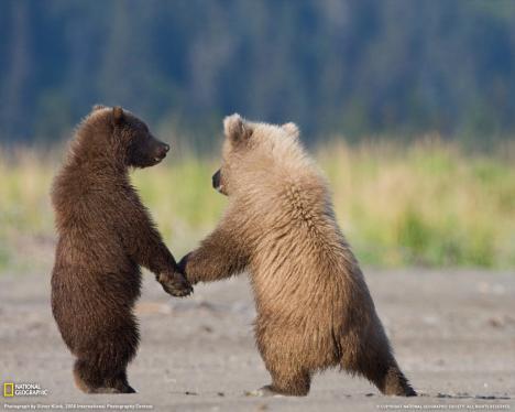 Supersött björnpar