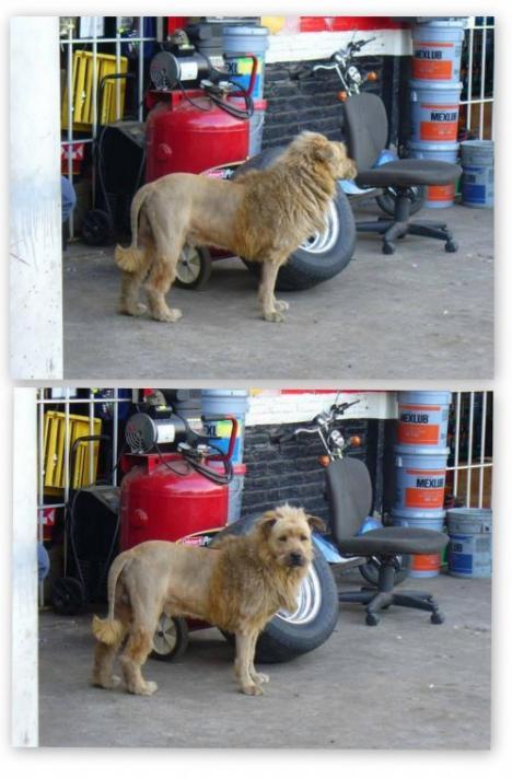 Ett lejon i garaget. Eller?