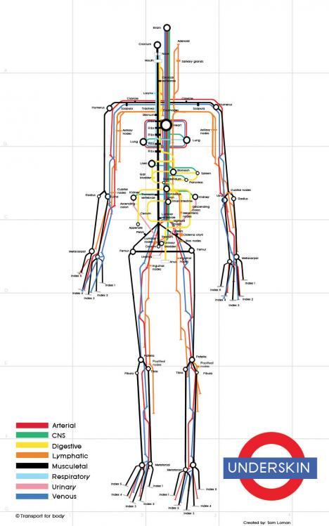 Kroppen som en tunnelbanekarta