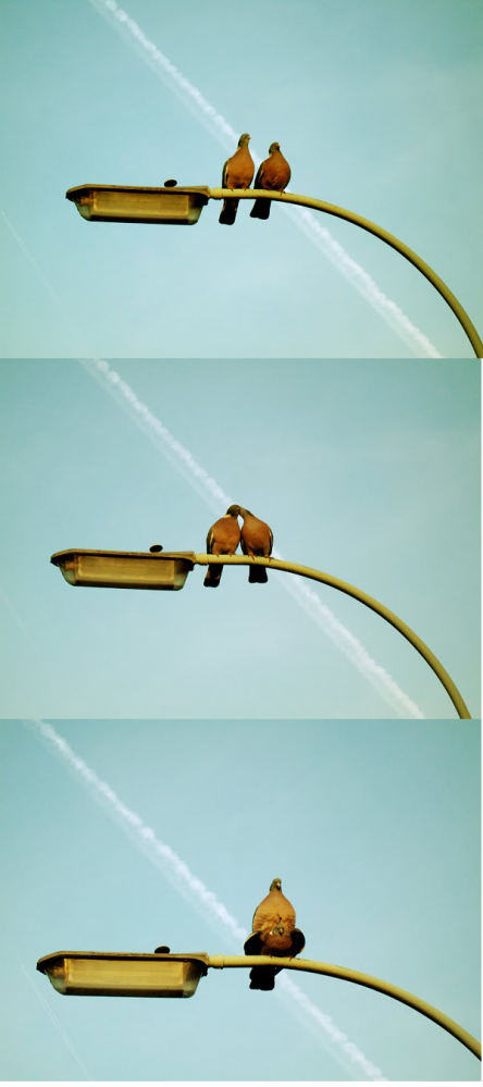 Turturduvor - Kärlek på en gatlykta