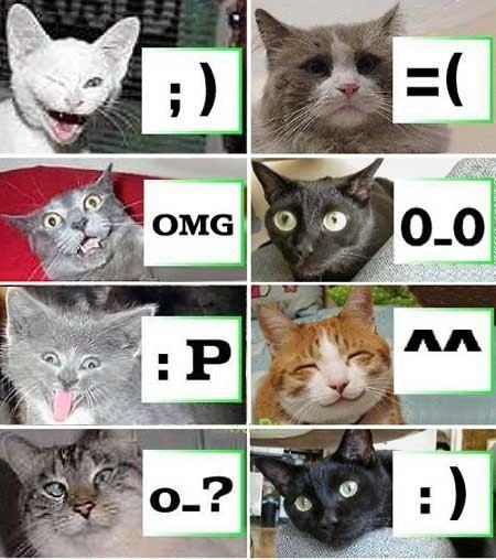 Katter demonstrerar smileys