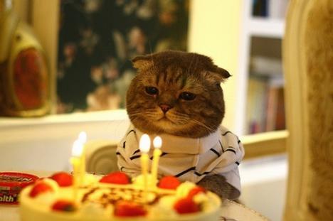 Söt katt fyller år