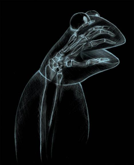 Röntgenbild på Kermit
