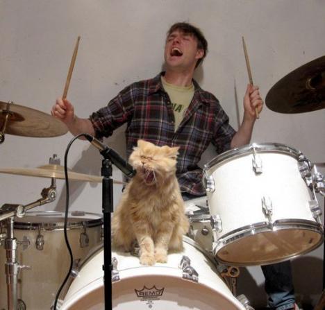 Söt katt sjunger dödsmetall på fritiden