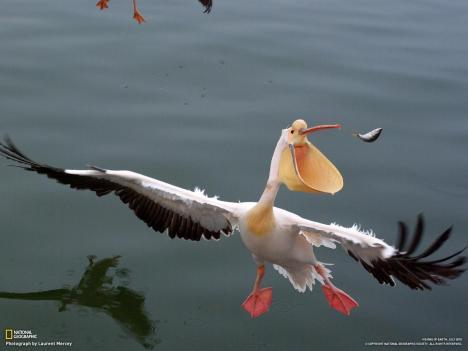 Fågel fångar fisk