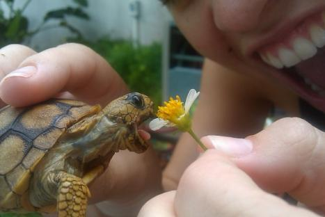 vad äter sköldpaddor